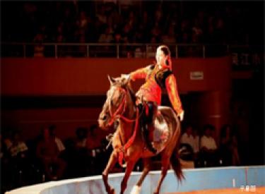 【沈阳恒大悦龙台】城西大事件之狂欢大马戏