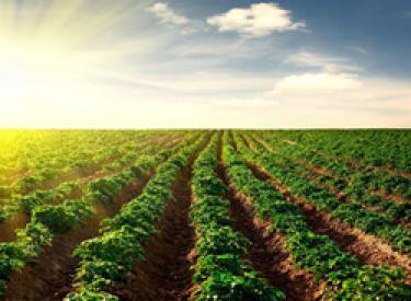 一季度 沈阳市农业经济发展稳步提升
