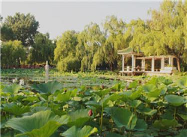 公园环伺,生态美境