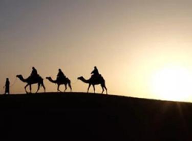 《沙漠骆驼》走红背后,你不知道的那些事……