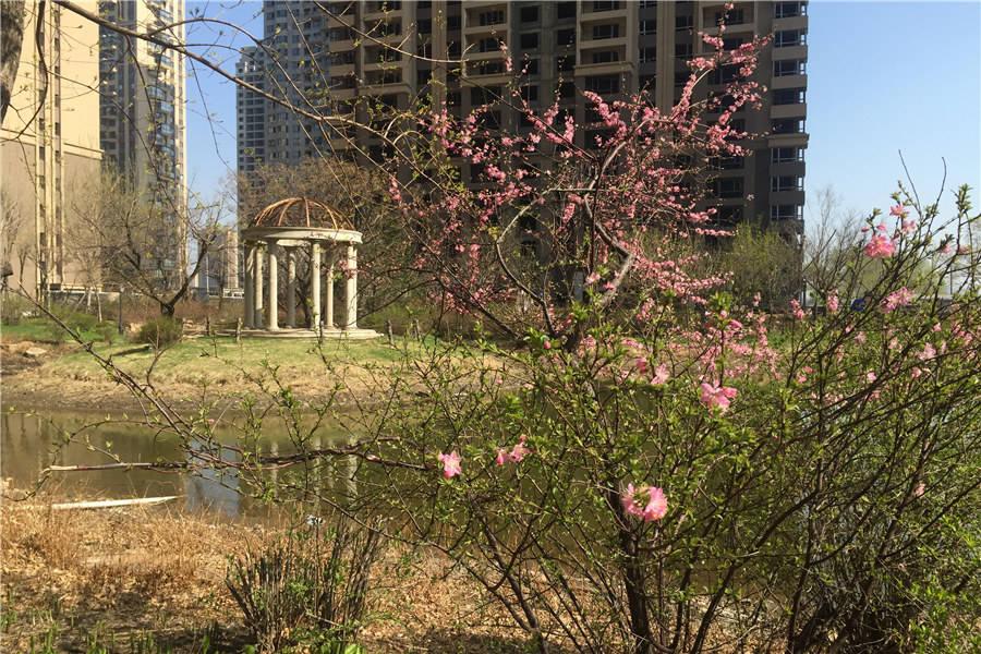 2016春 园区实景图