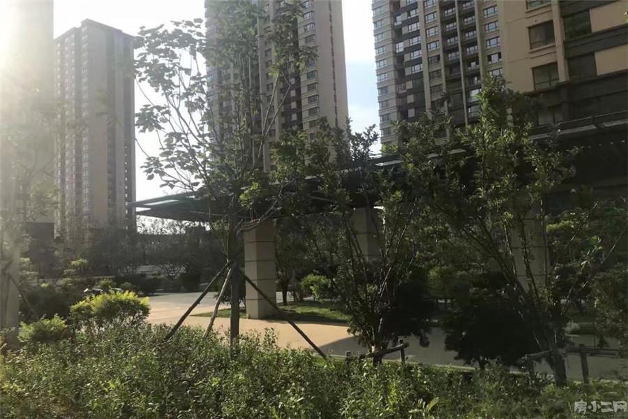 红豆杉温泉花园