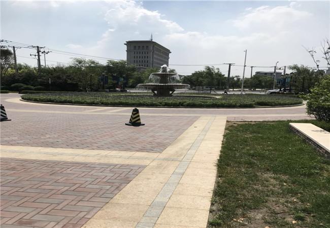 万锦香樟树实景图